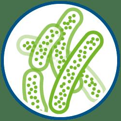 Flora Batterica | Zymerex Gonfiore Plus